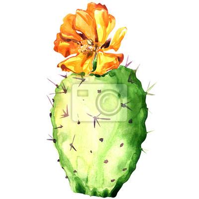 Opuntia cactus avec fleur jaune, peinture à l'aquarelle.