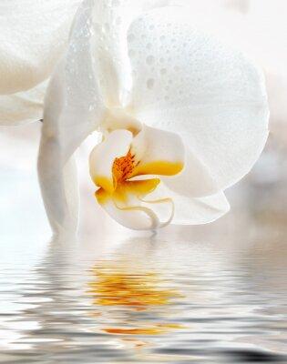 Sticker Orchidée blanche. Gros plan avec la réflexion dans l'eau.