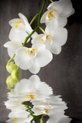 Sticker Orchidée blanche sur le fond gris.