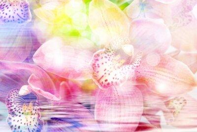 Sticker Orchidée, fleur, fin, haut