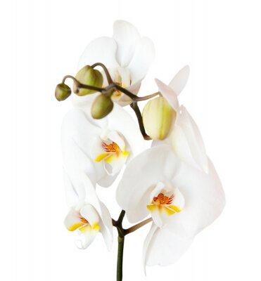 Sticker Orchidée, isolé sur fond blanc