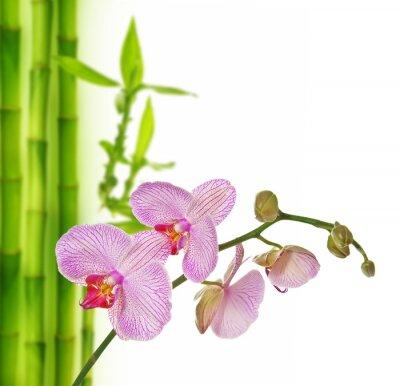 Sticker orchidée rose et bambou - spa fond