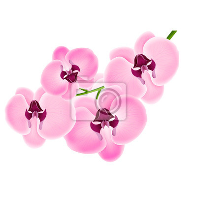 Orchidée sur un fond blanc