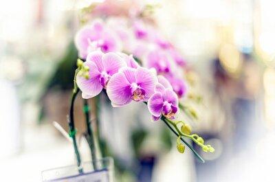 Sticker Orchidées