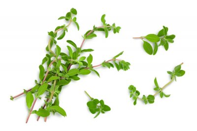 Sticker Oregano or marjoram leaves isolated on white background with clipping path and full depth of field. Top view. Flat lay