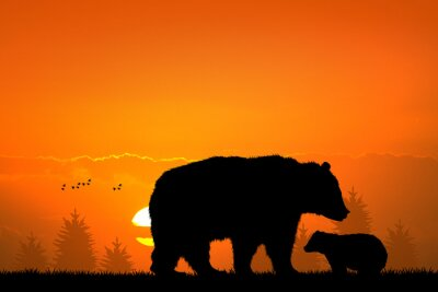 Sticker Ours brun et bébé ours dans la forêt