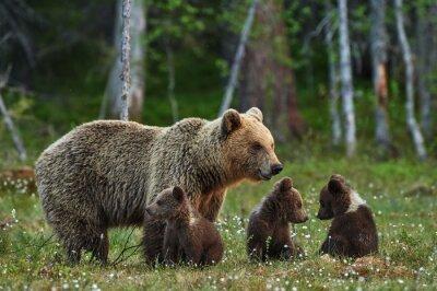 Sticker ours et oursons Mère