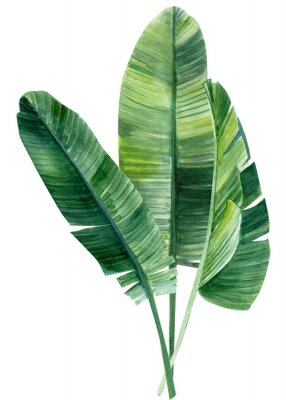Sticker palm tree, leaves of tropical forests on an isolated white background, watercolor illustration