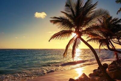 Sticker Palmier sur la plage tropicale