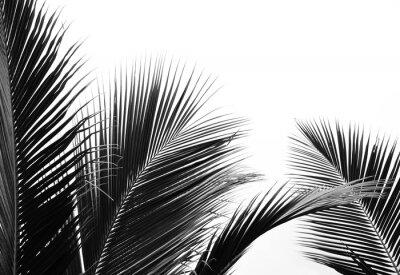 Sticker palms leaf on white background
