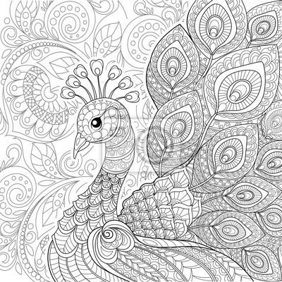 Paon Dans Le Style Zentangle Coloriage Antistress Pour Adultes Autocollants Murales Ajoure Paon Paon Myloview Fr