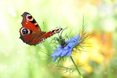 Sticker papillon 198