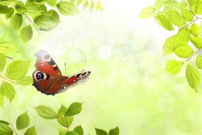 Sticker papillon 204