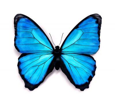 Sticker Papillon bleu