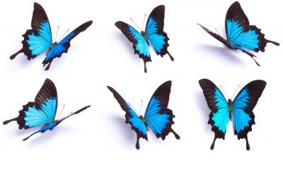 Sticker Papillon bleu et coloré sur fond blanc