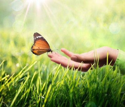 Sticker papillon dans la main sur l'herbe