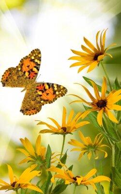 Sticker Papillon, fleurs, jardin, gros plan