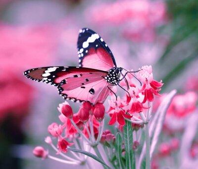 Sticker Papillon, oranger, fleur