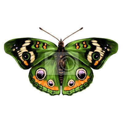 Aile De Papillon Dessin papillon, ouvert, ailes top, vue, symétrie, croquis le graphique