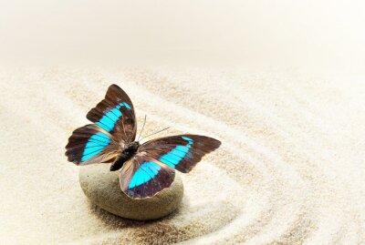 Sticker Papillon Prepona Laerte sur le sable
