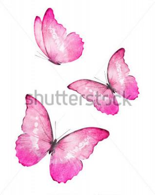 Sticker Papillons aquarelle de trois couleurs, isolé sur fond blanc