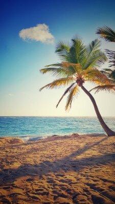 Sticker Paume, arbre, tropical, Île