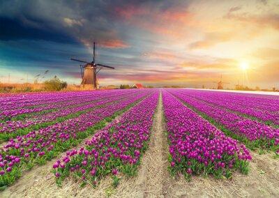 Sticker Paysage avec des tulipes, des moulins à vent traditionnels néerlandais et des maisons près du canal à Zaanse Schans, Pays-Bas, en Europe