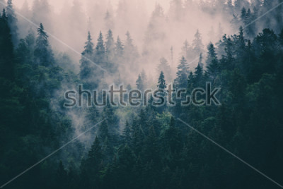 Sticker Paysage brumeux avec forêt de sapins dans un style rétro hipster vintage