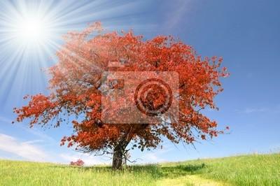 Paysage d'automne dans le parc national de Sumava - République tchèque