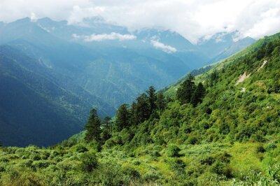 Sticker Paysage de forêt de montagne et vallée