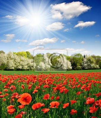 Paysage de printemps avec le pavot rouge