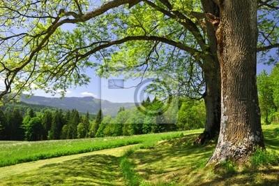 Paysage de printemps dans le parc national Sumava - République tchèque