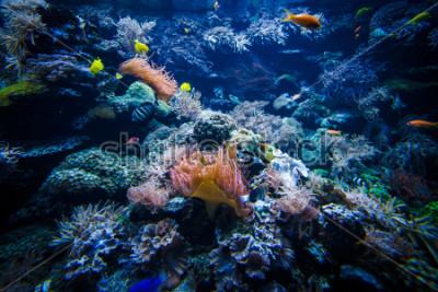 Sticker paysage de récif corallien sous-marin avec des poissons colorés