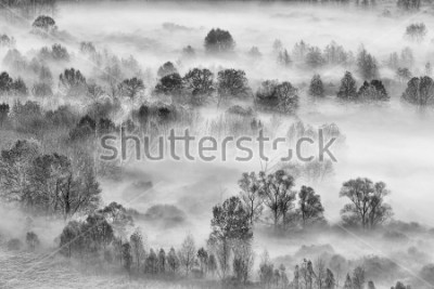 Sticker Paysage noir et blanc, la forêt brumeuse, Italie