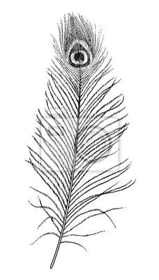 Sticker Peacock Plume Illustration Dessin Gravure Encre Ligne Art
