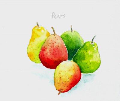Sticker pears'watercolor peint