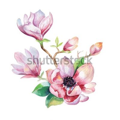 Sticker Peinture de papier peint à la fleur de magnolia. Dessinés à la main aquarelle illustration florale. Élément naturel décoratif de fleurs. Fond aquarelle d'art vintage.
