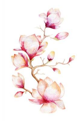 Sticker Peinture Magnolia papier peint à fleurs. Aquarelle dessinée à la main floral