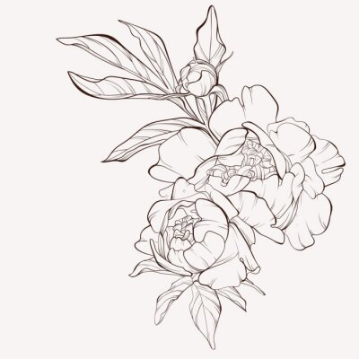 Sticker Peony flower and leaves drawing. Vector hand drawn engraved floral card. Botanical rose, branch and berry Black ink sketch. Great for tattoo, invitations, greeting cards, decor .