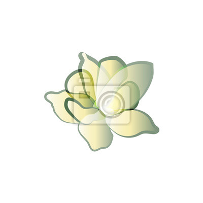 Pétales de fleurs avec du vert