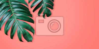 Sticker Philodendron tropical feuilles sur corail couleur fond été minimal