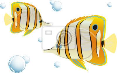 Pince à épiler poissons