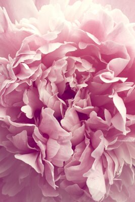 Sticker Pivoine fleur