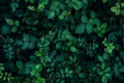 Sticker Plante verte feuilles fond, vue de dessus. Concept de printemps de la nature