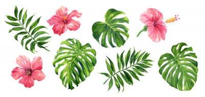 Sticker Plantes botaniques tropicales réalistes. Illustration aquarelle peinte à la main, isolée sur blanc.