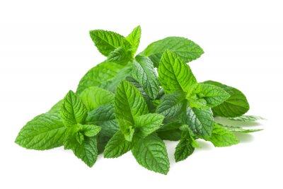 Sticker plantes de menthe