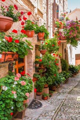 Sticker Plein, fleur, porche, petit, ville, Italie, ombrie