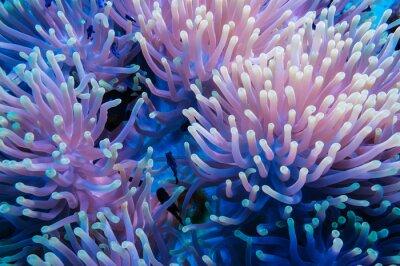 Sticker Poisson clown et anémone sur un récif de corail
