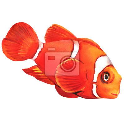 poisson de l'anémone de clown isolé