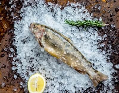Sticker poisson frais